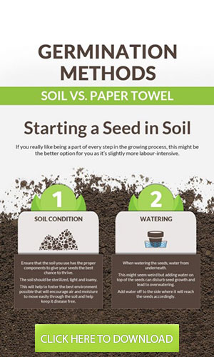 soil vs paper towel germination methods infographic