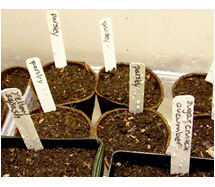 Starting-Seeds-in-Soil
